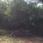 bushwackers-land-clearing-testimonial