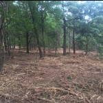 bushwackers-land-clearing-testimonial-after