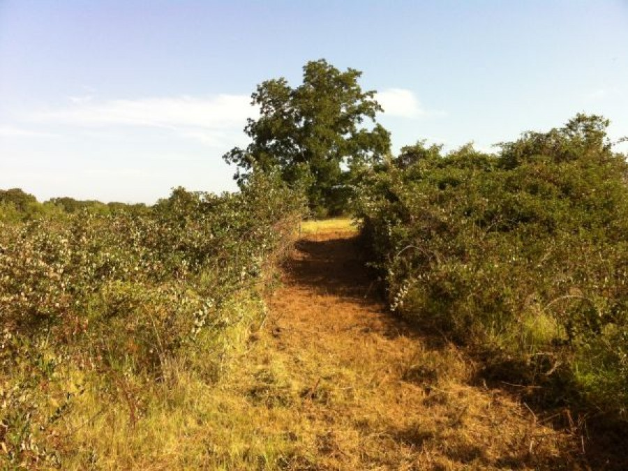 Bushwackers Land Clearing Before And Afterbushwackers Land